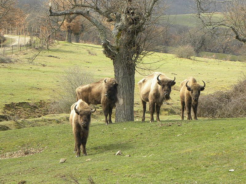 Qué ver en Burgos: 5 lugares maravillosos